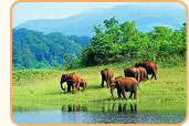 Munnar Tour Packages India